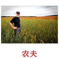 农夫 picture flashcards