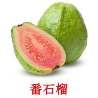 番石榴 picture flashcards