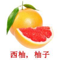 西柚,柚子 picture flashcards