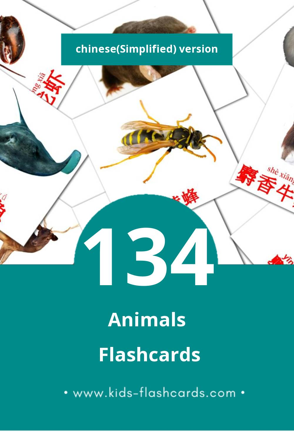 Visual 动物 Flashcards for Toddlers (134 cards in Chinese(Simplified))