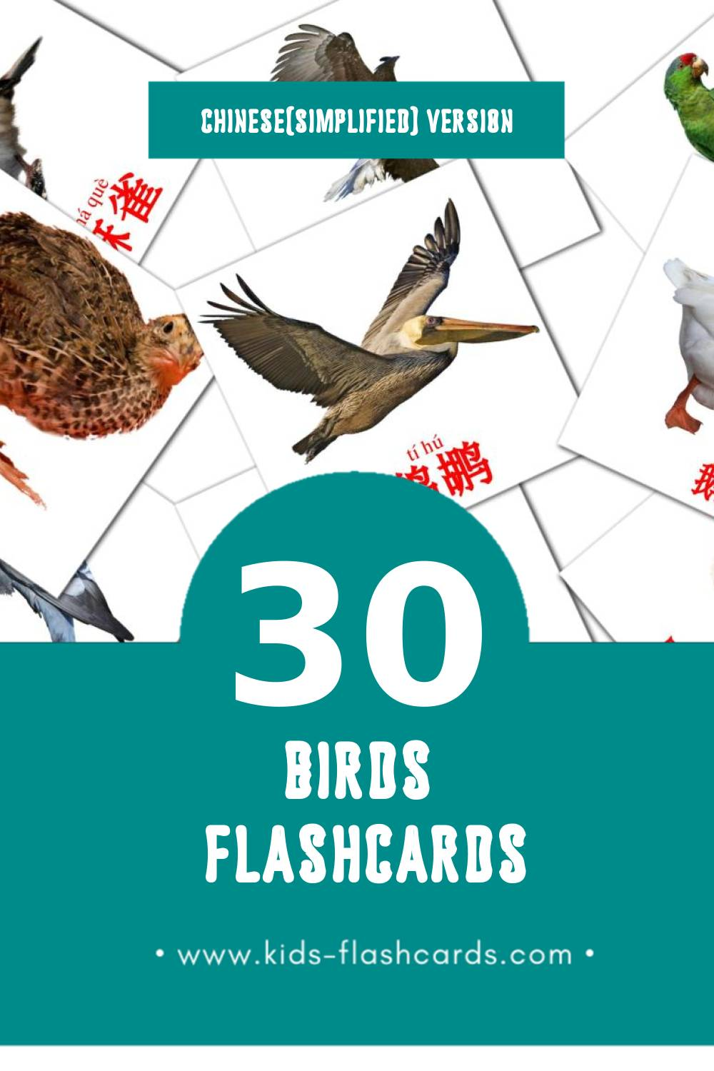 Visual 鸟类 Flashcards for Toddlers (30 cards in Chinese(Simplified))