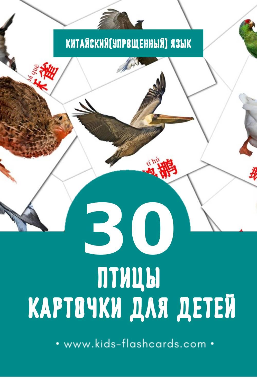 """""""鸟类"""" - Визуальный Китайский(Упрощенный) Словарь для Малышей (30 картинок)"""
